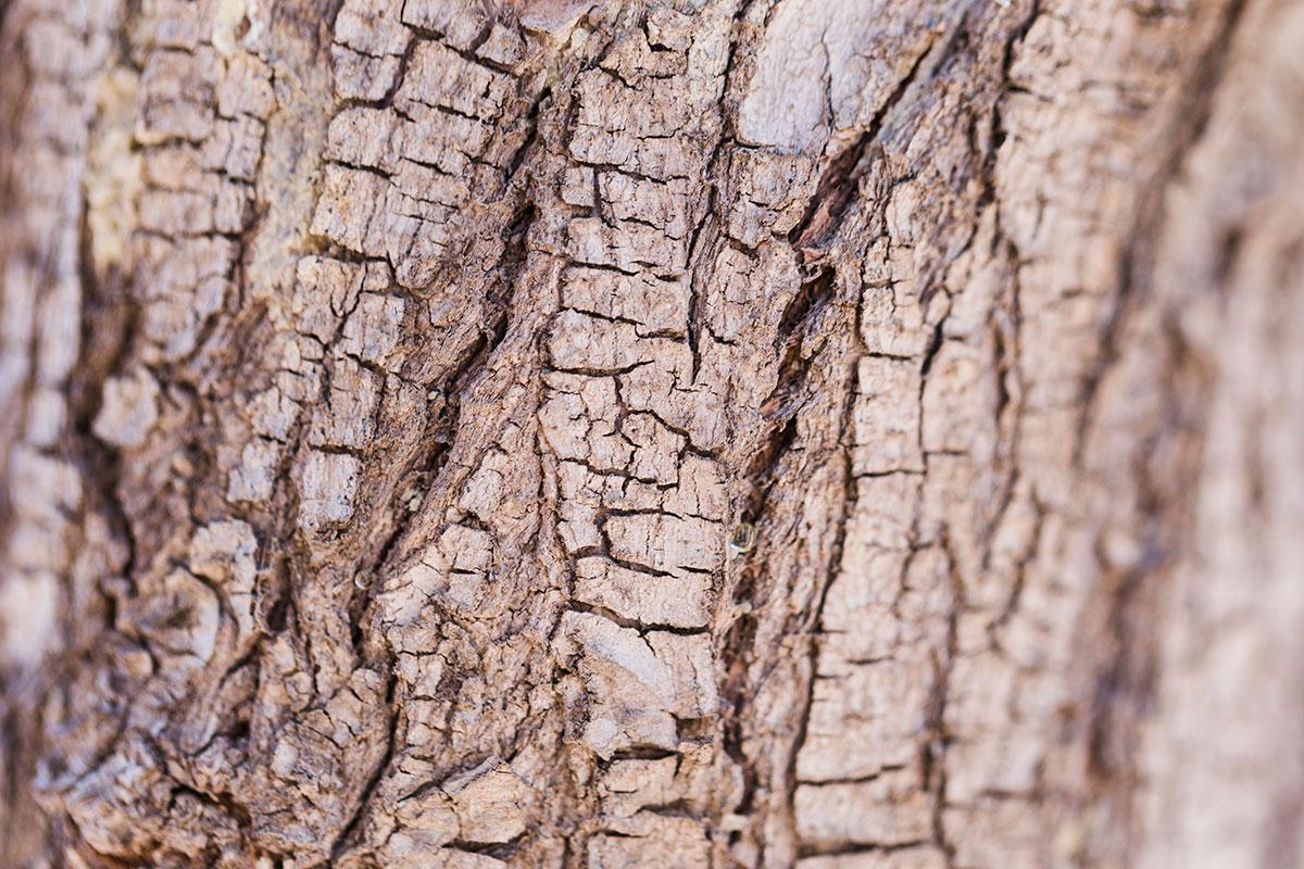 Pluta je prirodni materijal drvenog porekla