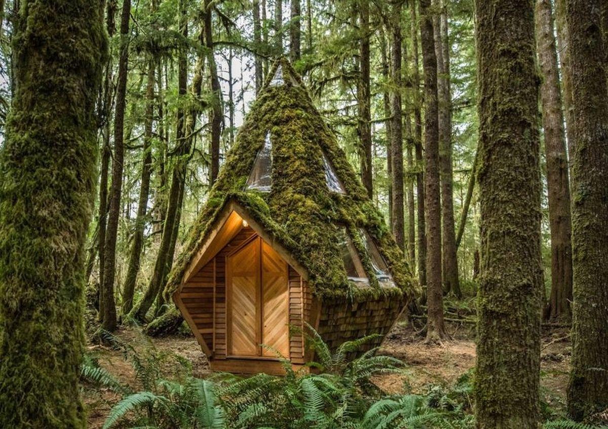 Kuća u šumi