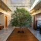 Drvo usred kuće kao deo enterijera