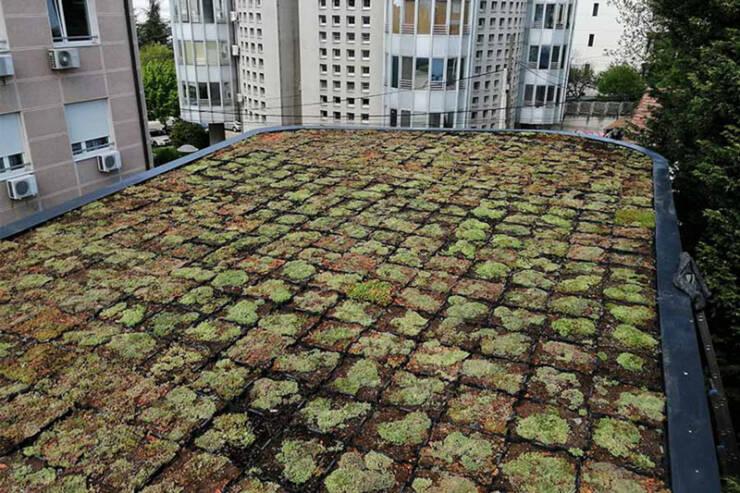 Green Decor doo / kasetni zeleni krovovi