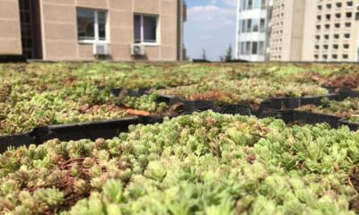 foto: Green Decor doo / kasete za zelene krovove su jedinstvene po svojim rešenjima za uklapanje i navodnjavanje