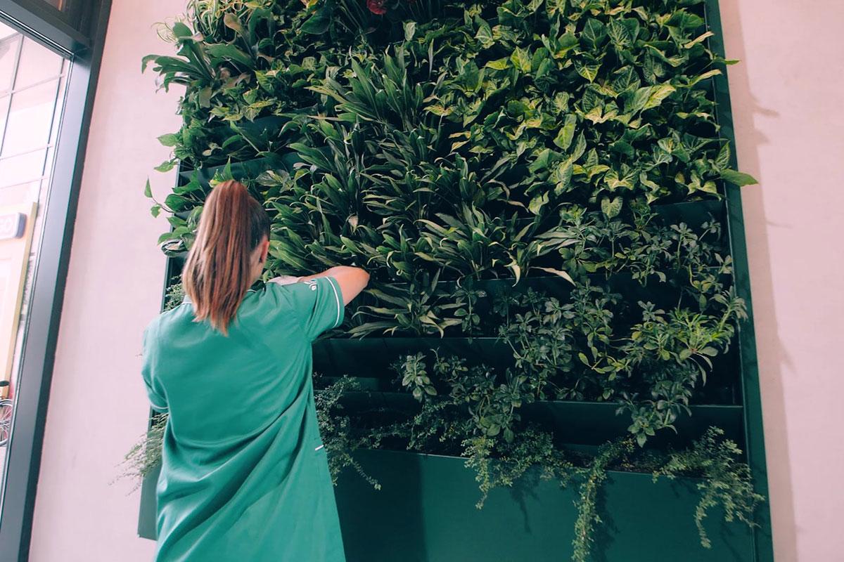 Zeleni zid na stambenom objektu
