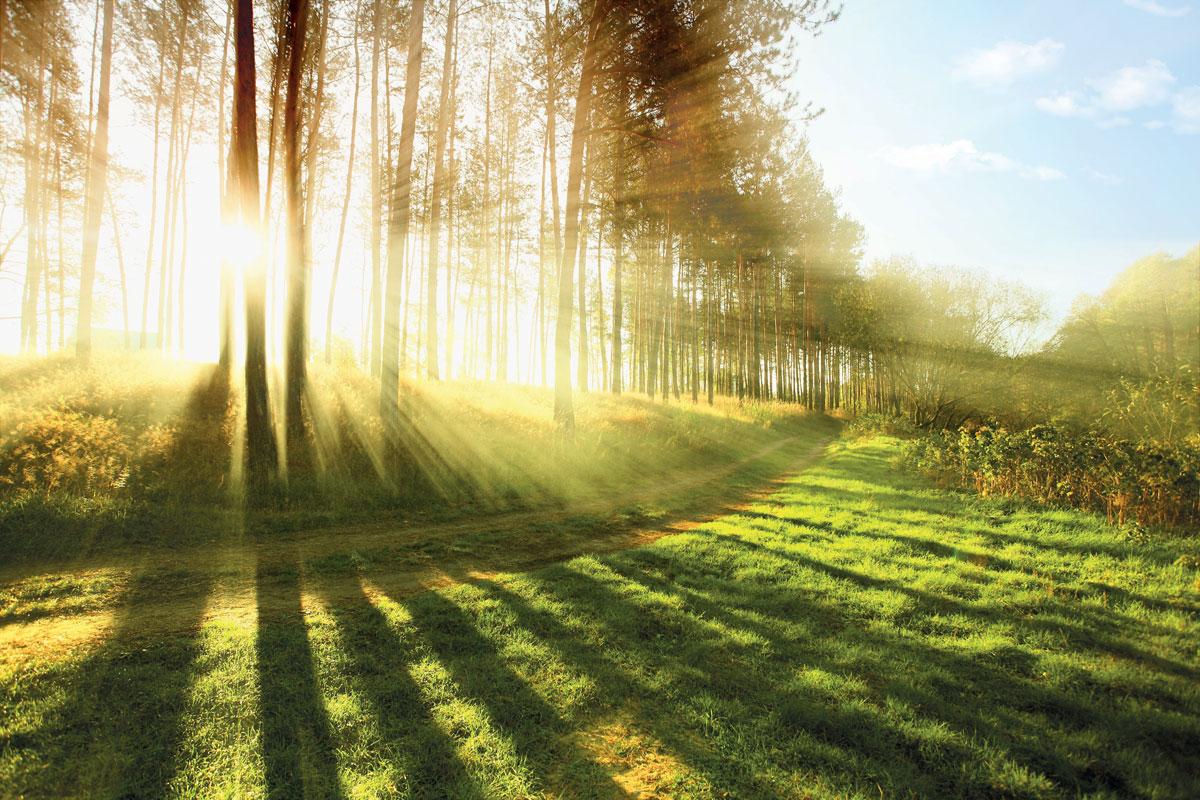 Priroda pokazuje da je jednostavnije i efikasnije čuvati postojeću toplotu i štedeti postojeću energiju