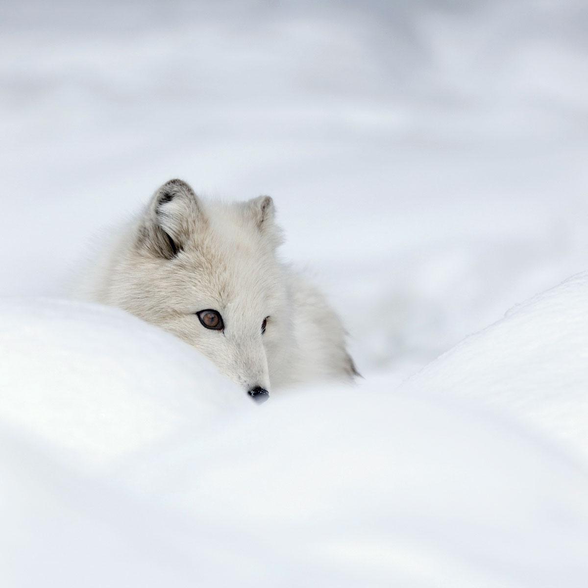 Životinje su pravi majstori termoizolacije!