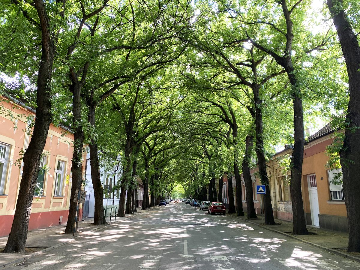 ulica generala drapsina