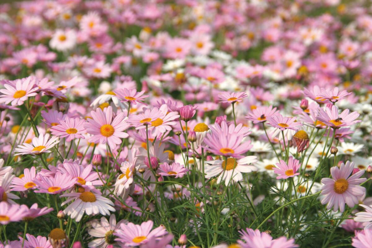 Cveće na livadi